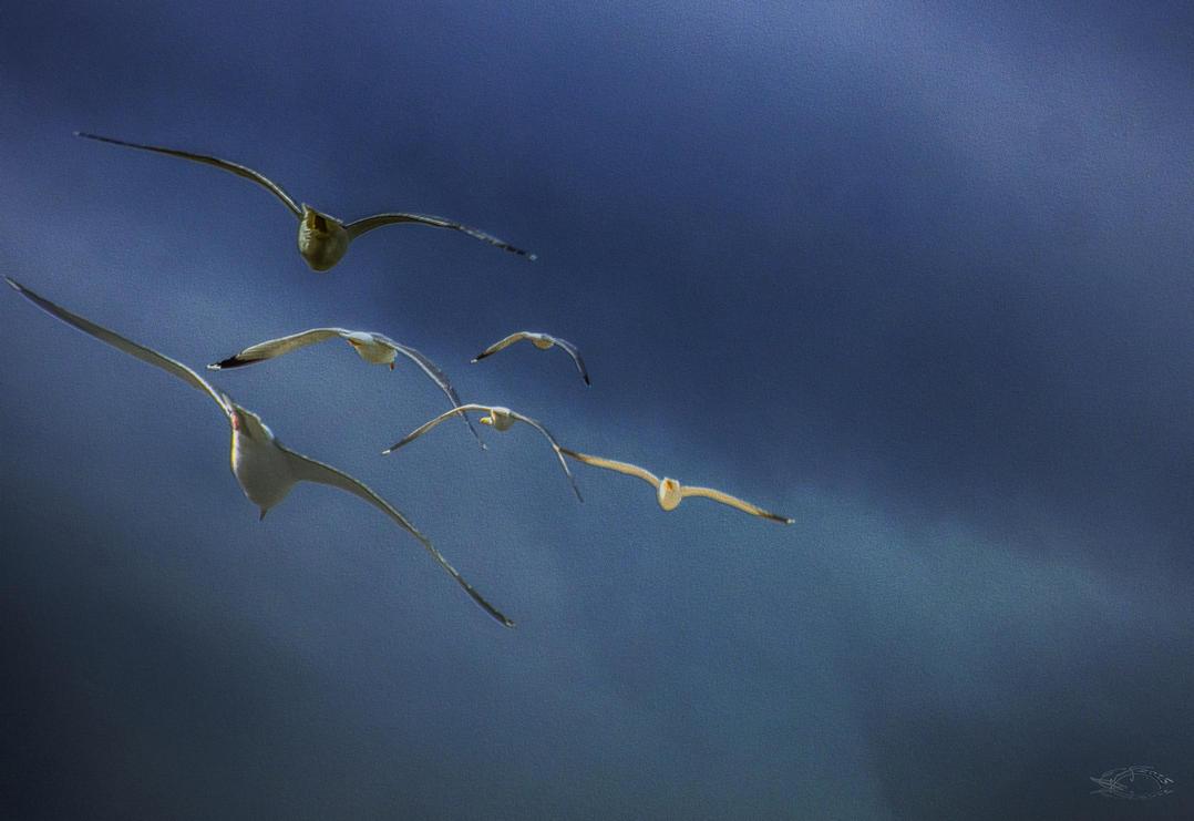 Flock of birds by bulgphoto