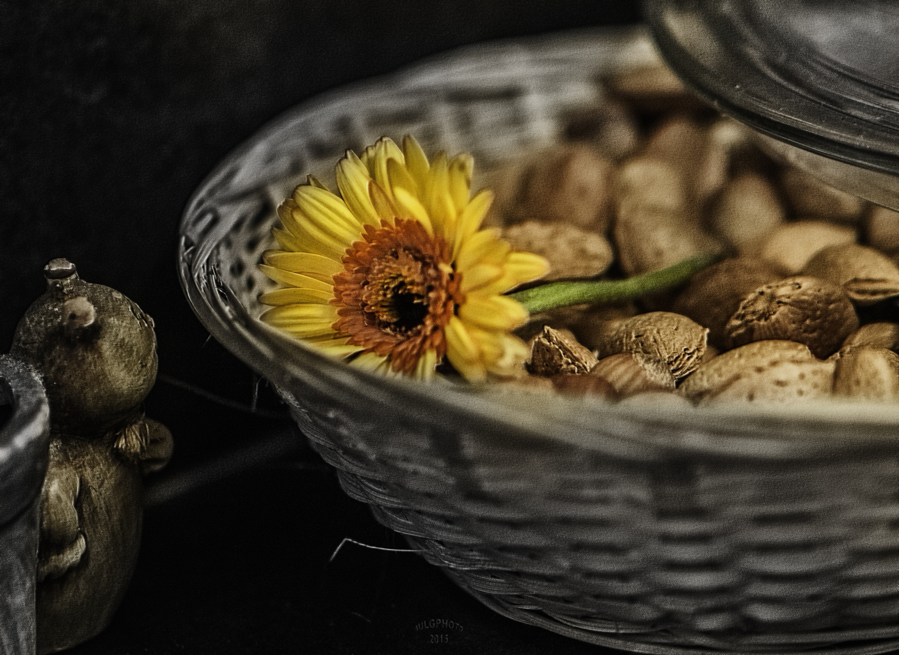 Look The Flower by bulgphoto