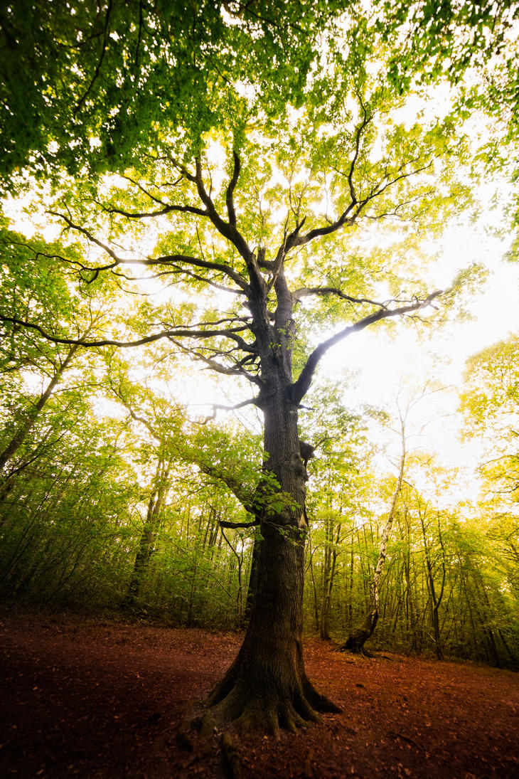 Light hole tree by bulgphoto