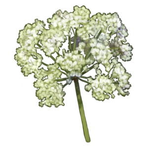 Hemlock - 10 Crystals by The-Below