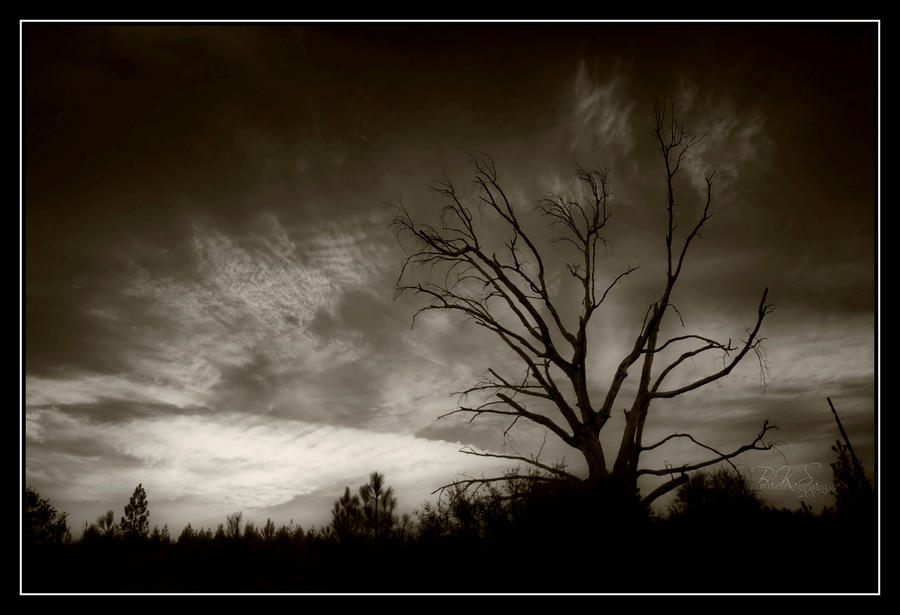 This Old Tree by o0oLUXo0o