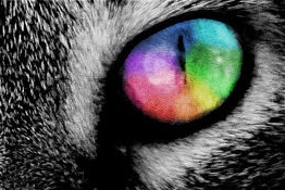 Rainbow Cat Eye. by strappermelon
