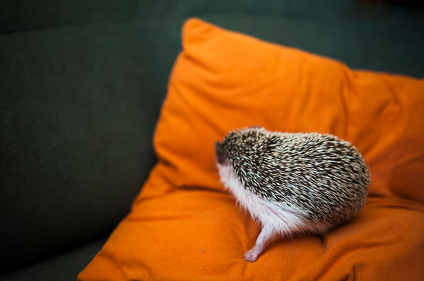 When even hedgehog would not speak to you ... by Trepka