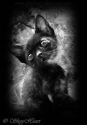 Black kitten by SkyyHeart