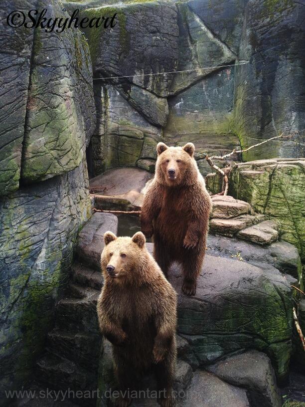 Bears by SkyyHeart