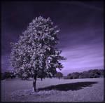 The Shadow of Summer by OJ-OK