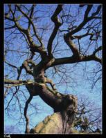 Oak by OJ-OK