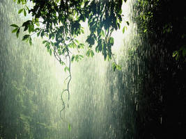 Rain Forest by james23m