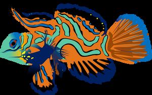 Mandarin Fish by AdamZT2