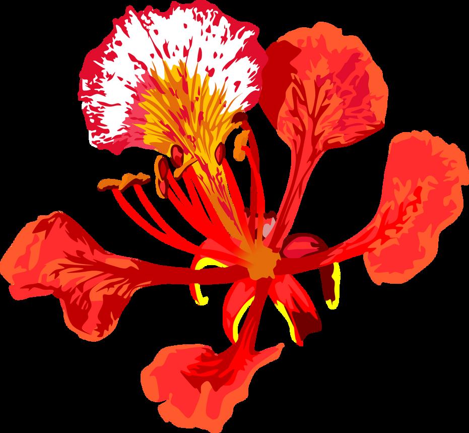 poinciana flower by adamzt2 on deviantart microsoft clip art free online microsoft clip art free images download