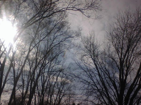 Winter Sky by The-Immortal-Iris