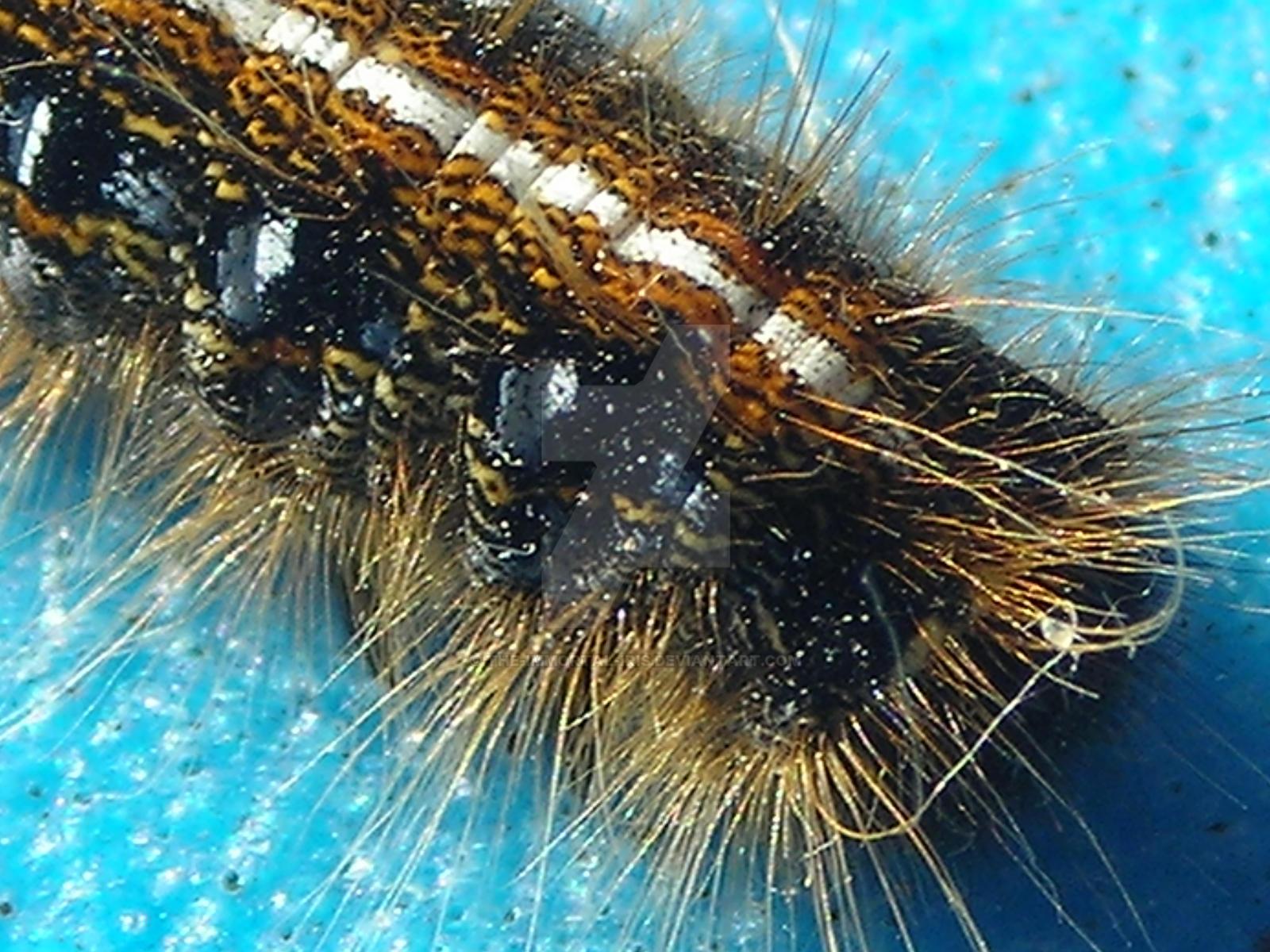 Caterpillar by The-Immortal-Iris