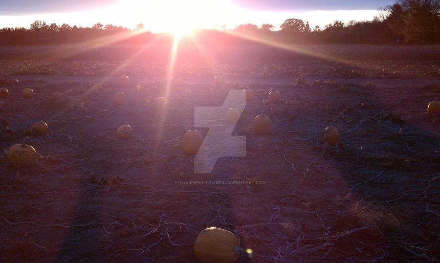 Pumpkin Patch by The-Immortal-Iris