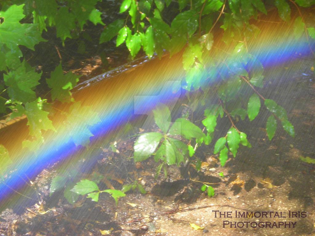 Rainy Rainbow in the Sun by The-Immortal-Iris