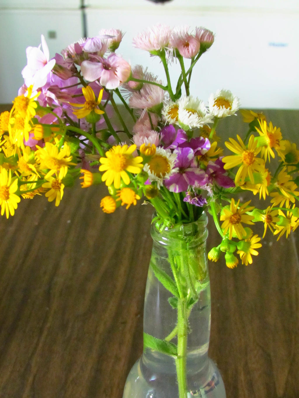Wild Flowers by The-Immortal-Iris