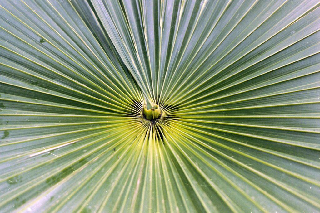 Palms at Kew by valo-rose