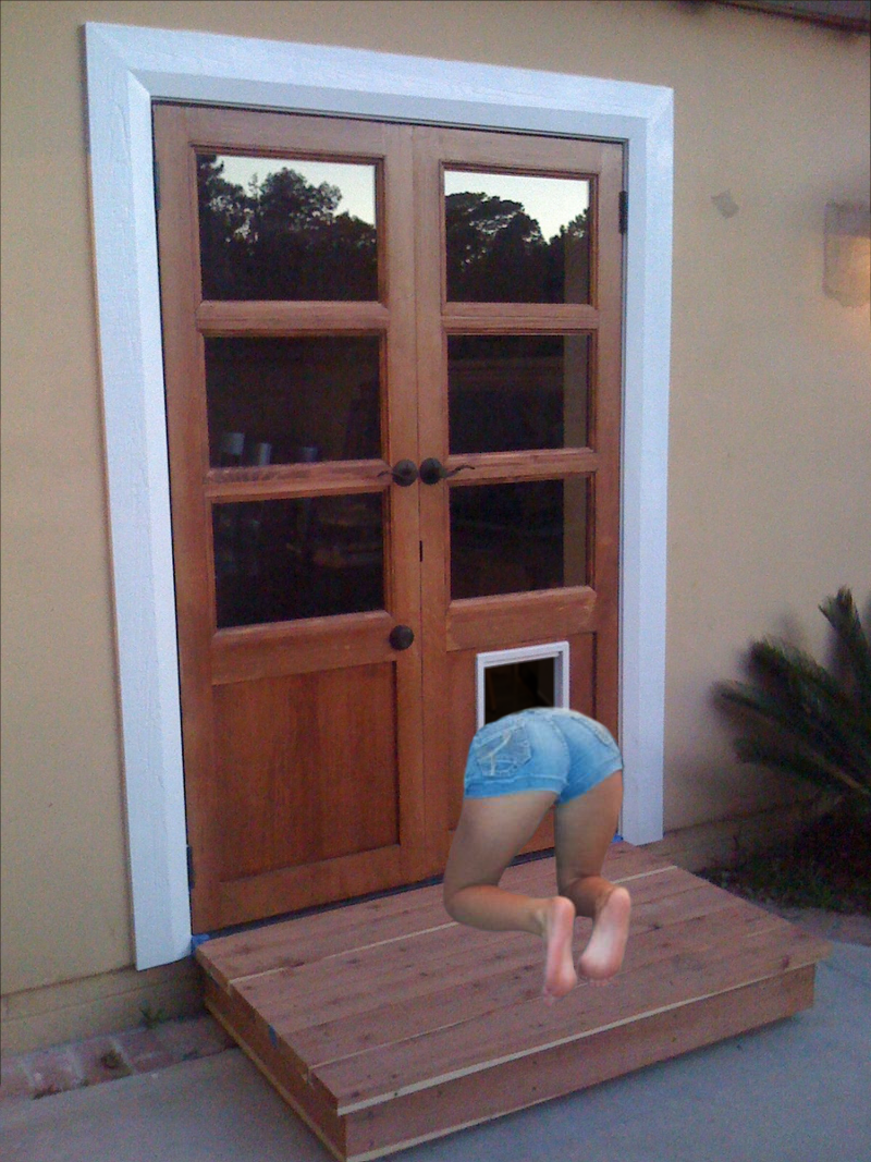 The Dog Door Image Collections Doors Design Modern