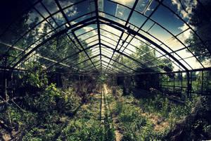 abandoned glasshouse I by WilhelmBielawa