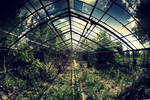 abandoned glasshouse I