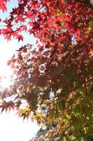 Changing Leaves in Nara Japan by Strikethecamera