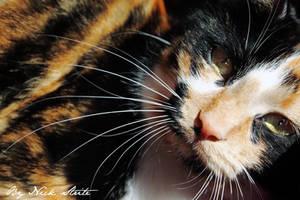 Zelda Whiskers by Strikethecamera