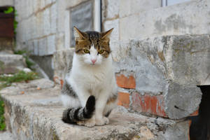 Alley Cat, Montenegro by Real-Neil