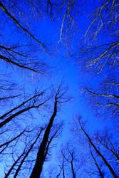 Woodland Sky View by vickychica