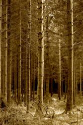 Woodland by vickychica