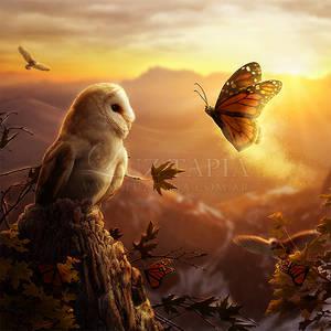 Sunset Magic by LuzTapia