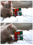 I can solve it.