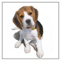 beagle Sappho by nomad666