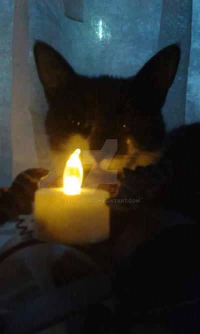 Samhain Kitten  by lellastag