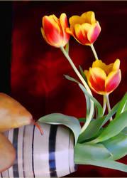 Tulip Still simplified