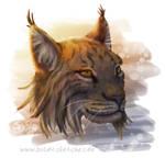 Lynx rufus