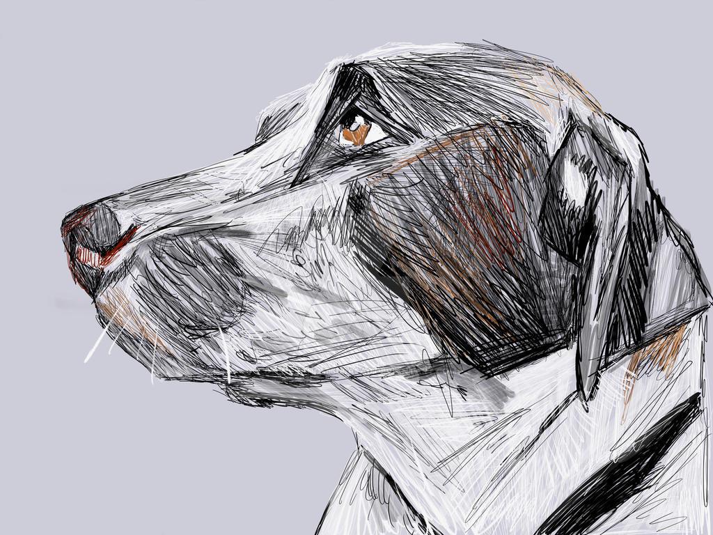 My Dog Rexx! by 0Tenshi-no-Tsubasa0
