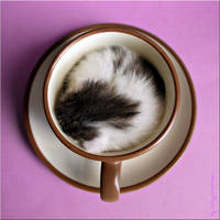 a cup of cat1 by ladyysparrow