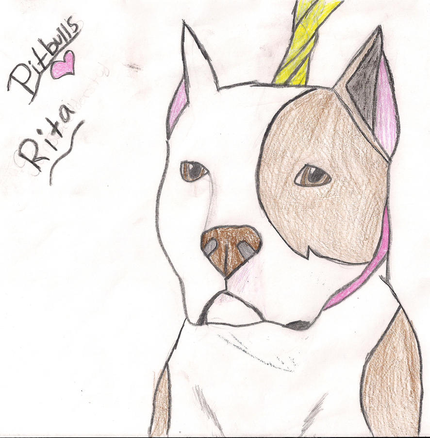 How To Draw A Pitbull ...