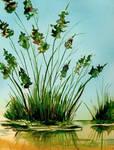 Marsh Weeds