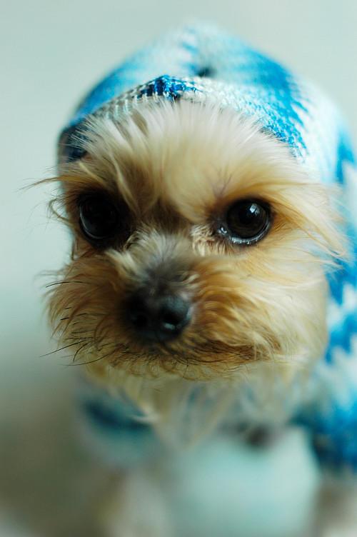 My Dog by sealove0699