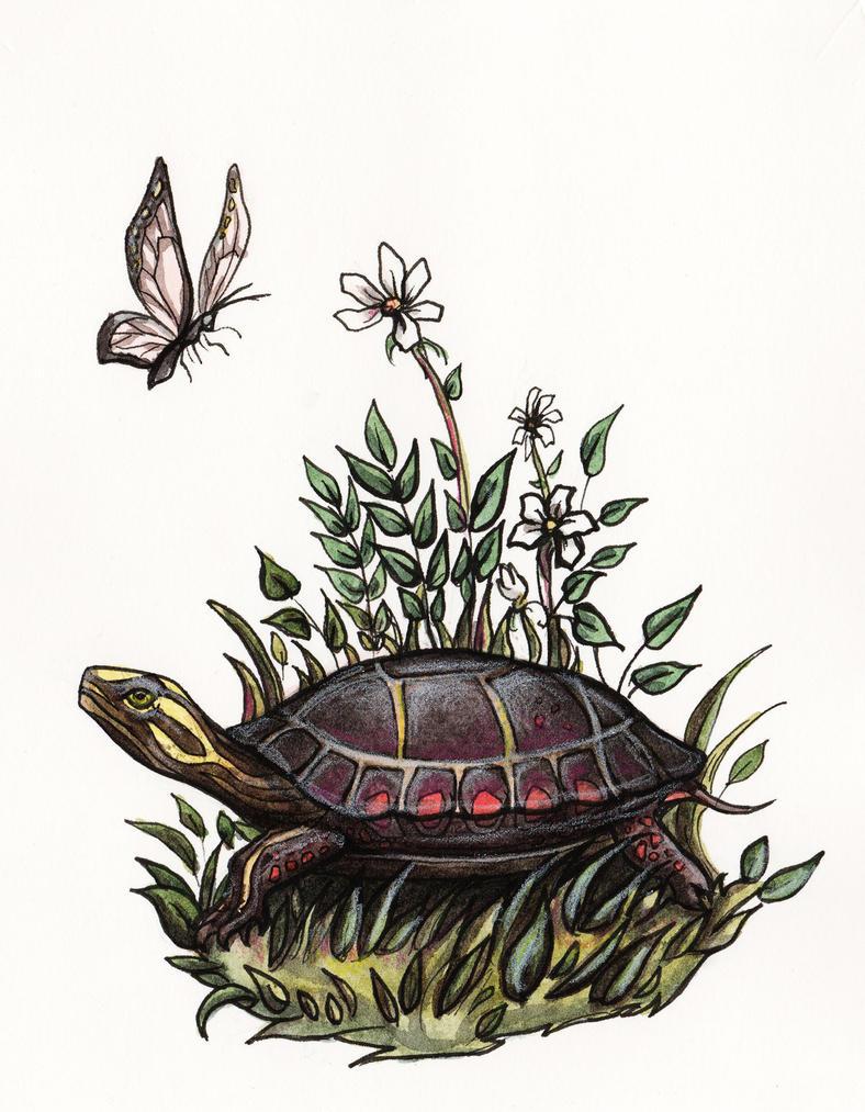 Painted Turtle by Evanira
