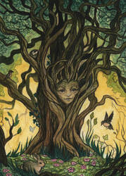 Wise old Tree Woman