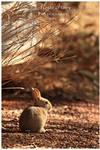 Vigilance by OutbackReality