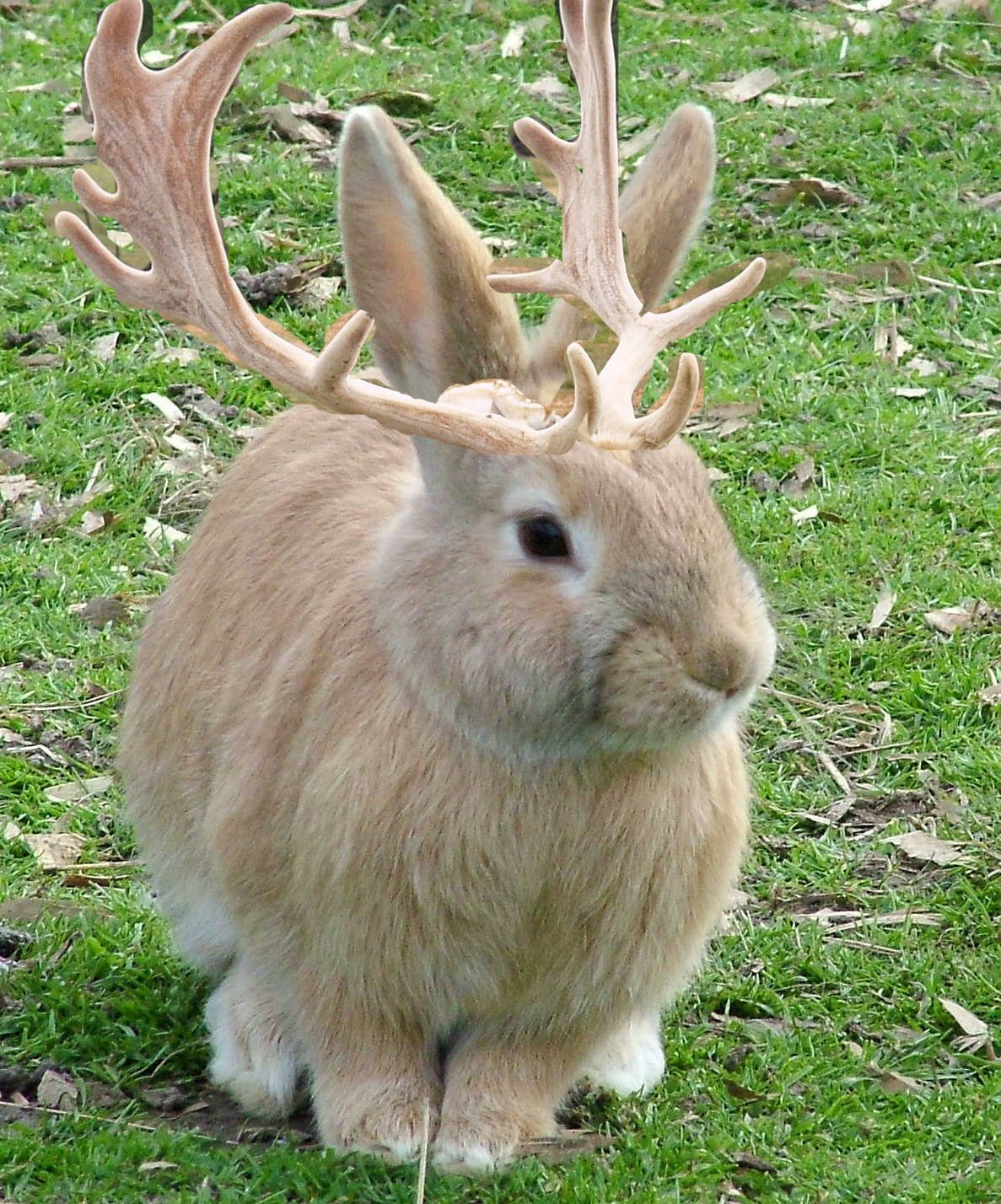 like to acquire a stuffed JACKALOPE for a friend. Where can I