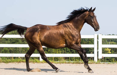 Bay horse stock 13 by Skunktail17