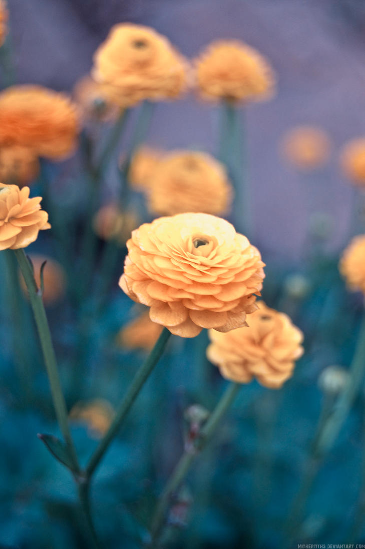 Golden Petals by Mithertiths