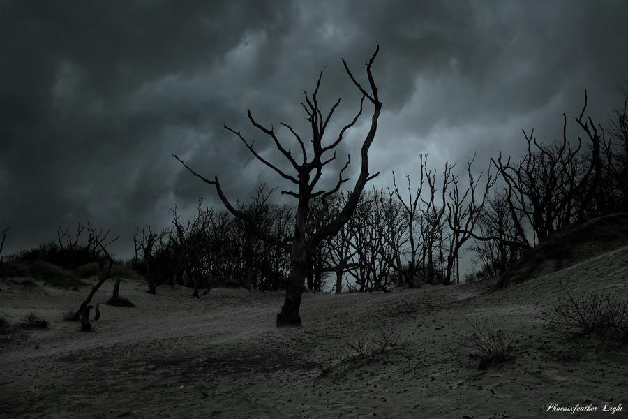 Etre borné à parfois du bon [Entraînement solo continu] Spirits_of_storm_by_phoenixfeatherxlight-d8dmfyg