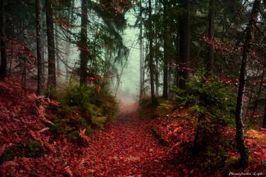 Sorcerer's Path by Yesterdawn