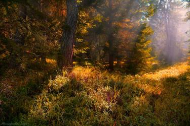 The Hidden Plateau by Yesterdawn