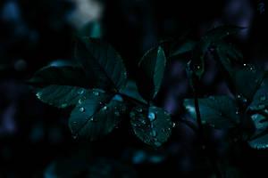 Sorrow by Yesterdawn