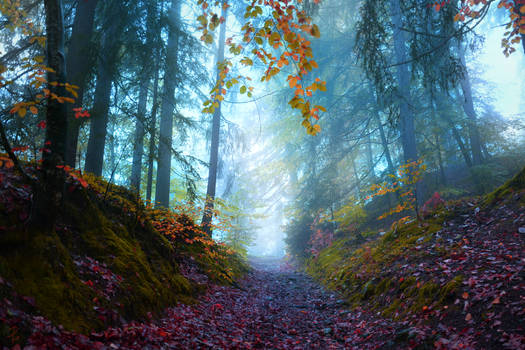 Path of Prajna
